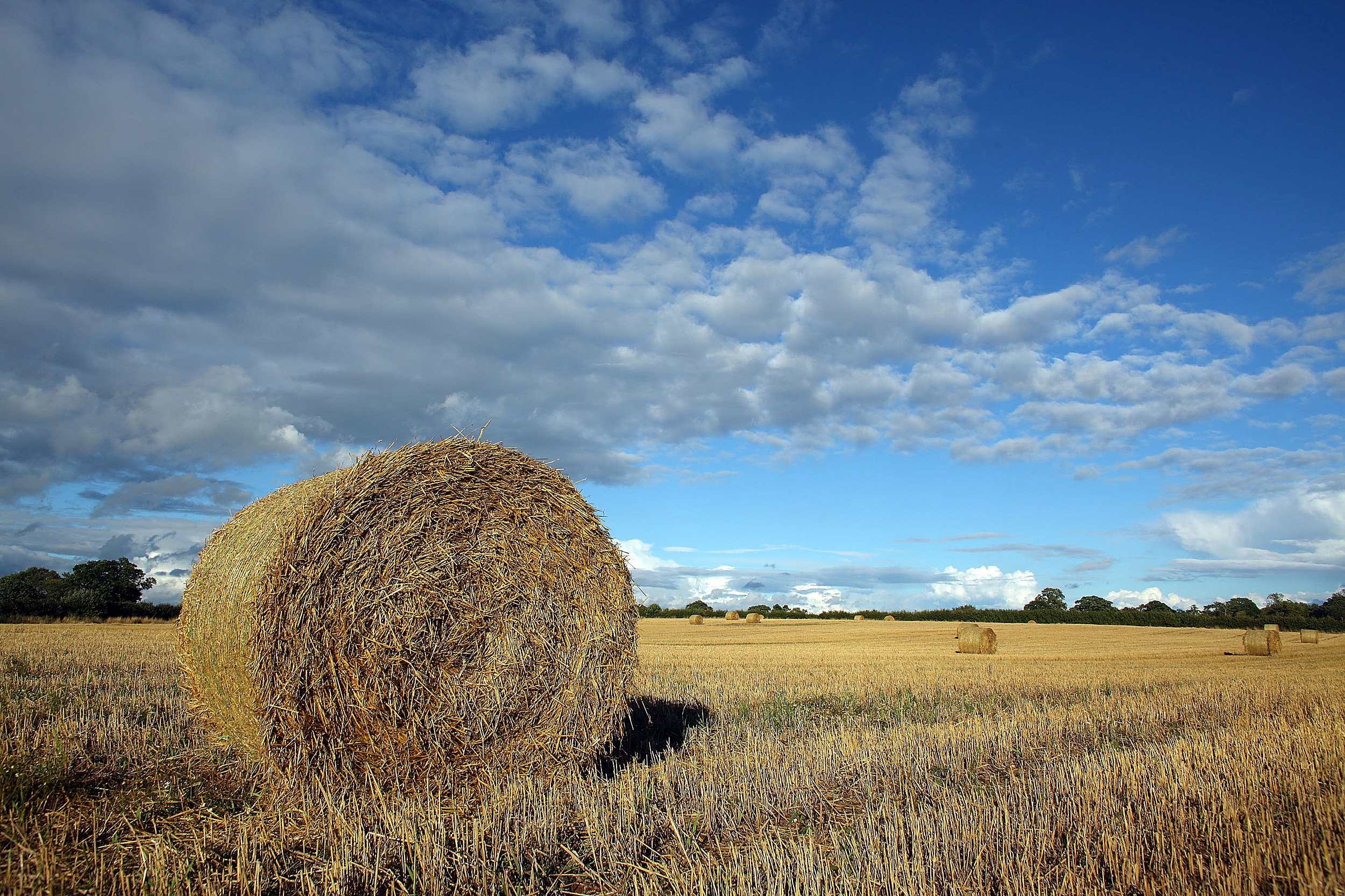 Farmers Report Increase In Hay Theft As Prices Soar