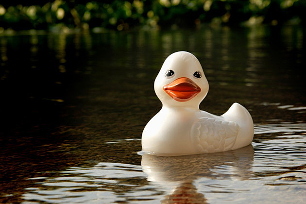 rubber river duck