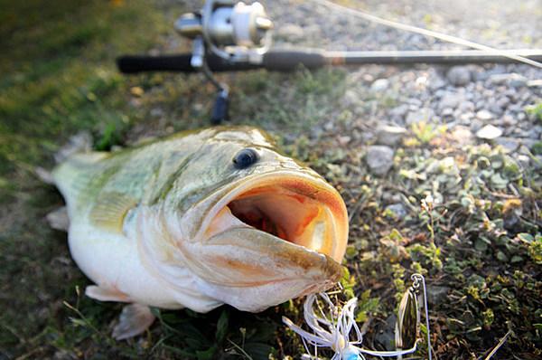 Bass fishing season starts saturday for Bass fishing season