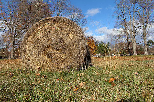 Hay rolls at the property of the Home of Franklin D. Roosevelt